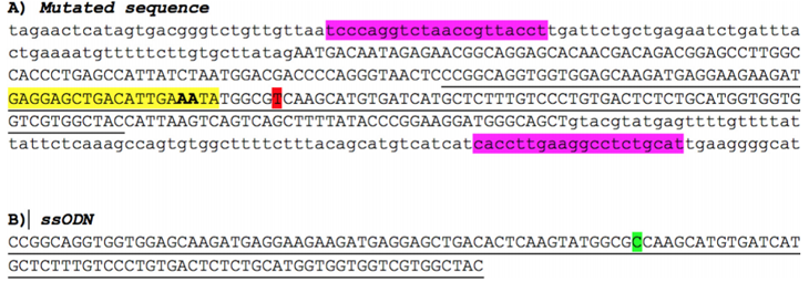 CRISPR/Cas9 and ssODN used to repair the point mutation in A79V-hiPSC.