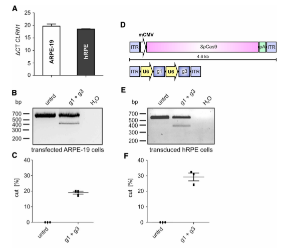 CRISPR-Cas9-Mediated CLRN1 Gene Editing in Transfected ARPE-19 and rAAV Transduced Human RPE Cells.